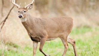 What Happened to All the Deer Hunters?